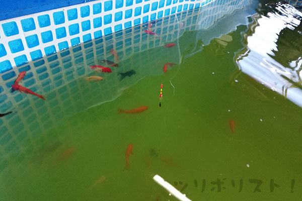 川島釣り堀_021