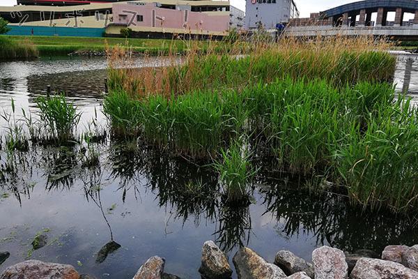 旧中川水辺公園_004