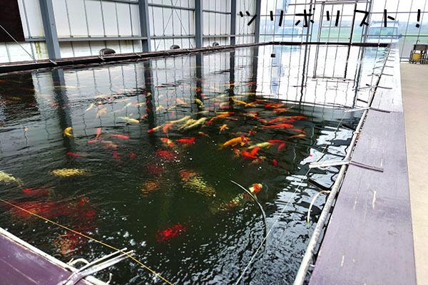 おかべ015_第1池(旧第4池)