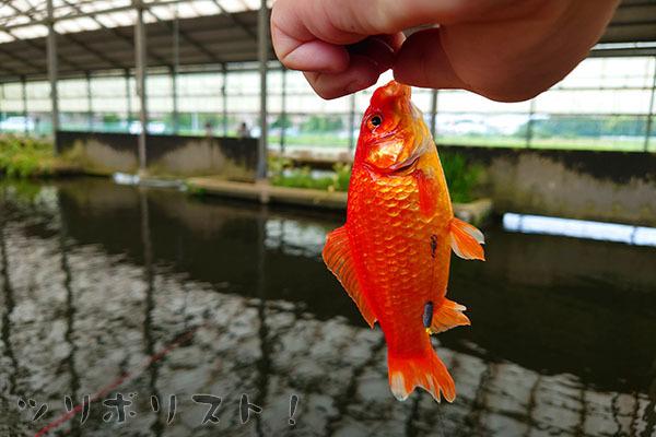 座間養魚場030