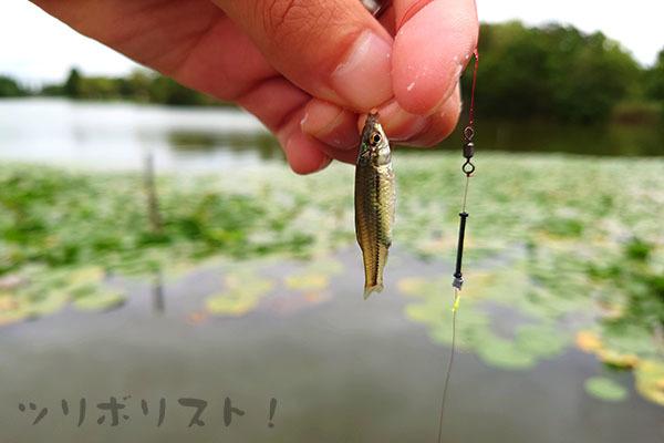 水元公園060