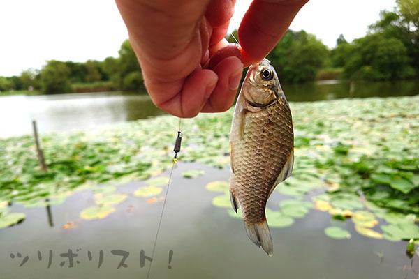 水元公園061