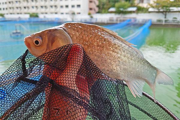 砂町魚釣場027