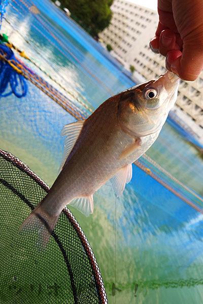 砂町魚釣場028