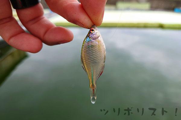 Fuji015.jpg