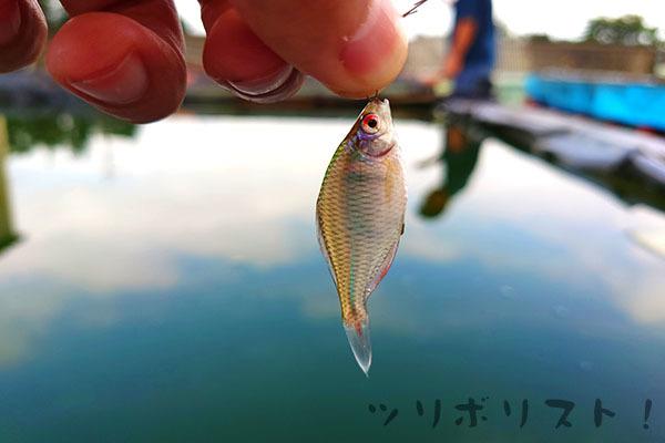 Fuji024.jpg