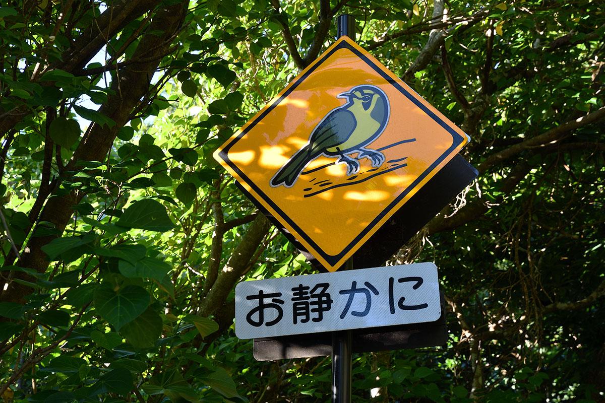 hahajima_201107_d500_9285_1200.jpg