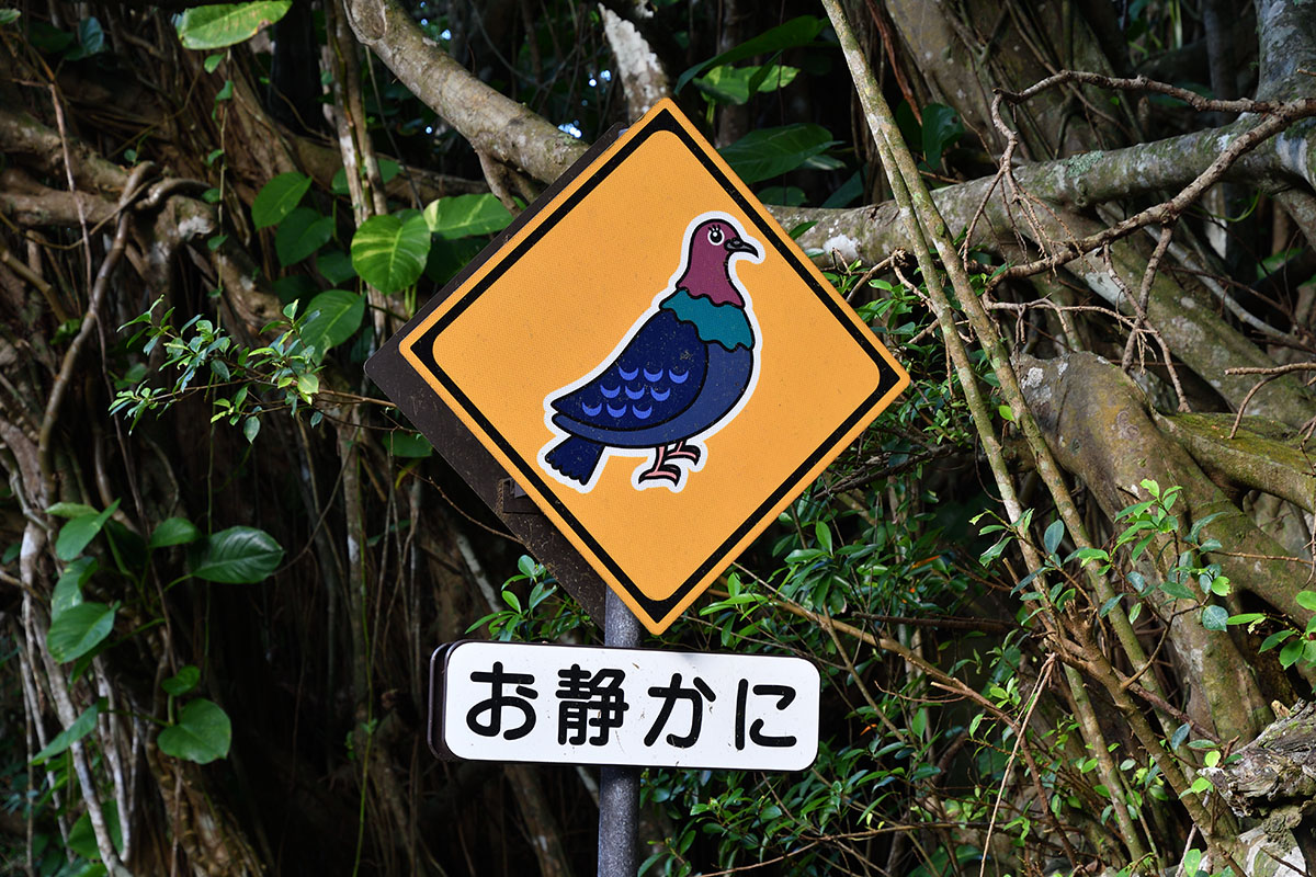 hahajima_201107_d500_9309_1200.jpg