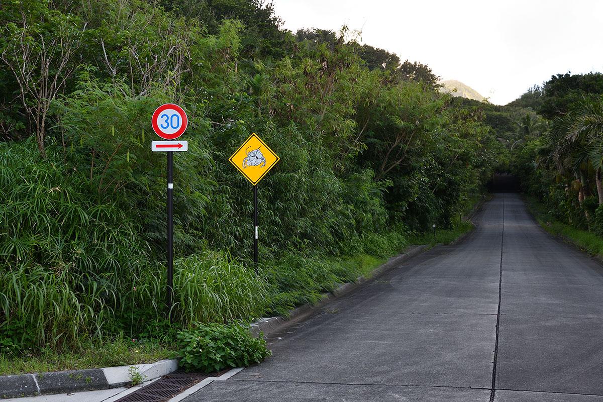 hahajima_201107_d500_9329_1200.jpg