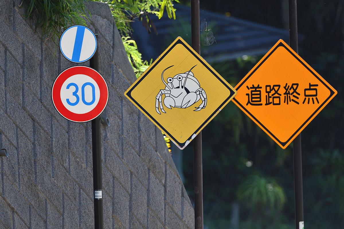 hahajima_201108_d500_9471_1200.jpg