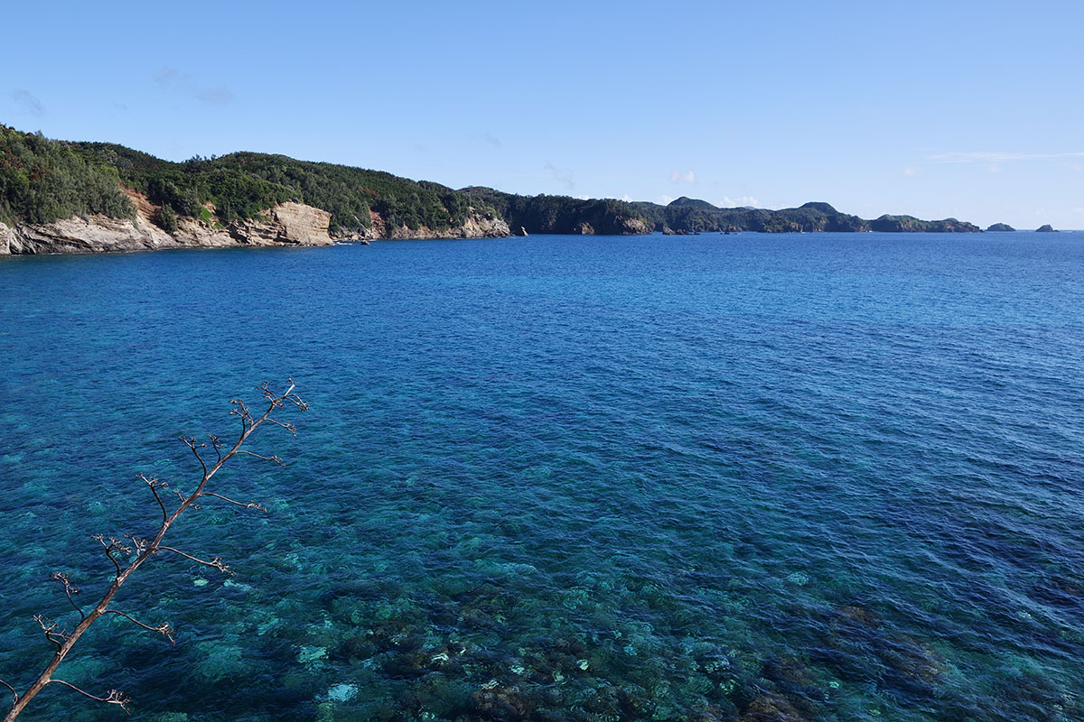 hahajima_201109_d500_1228_1200.jpg
