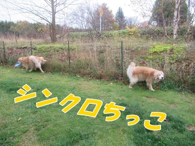 20201102IMG_3199.jpg