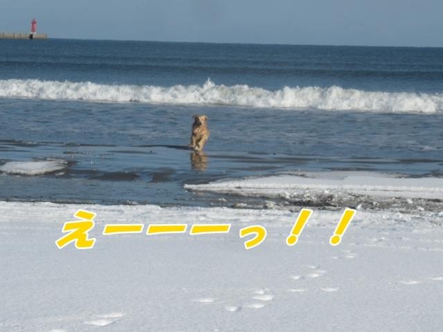 20201212IMG_0528.jpg