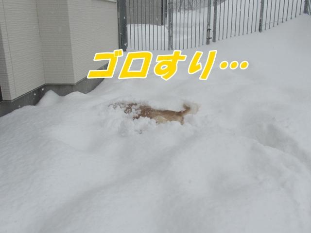 20210116IMG_5212.jpg