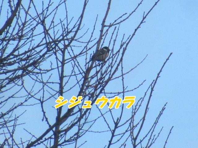 20210408IMG_8526.jpg