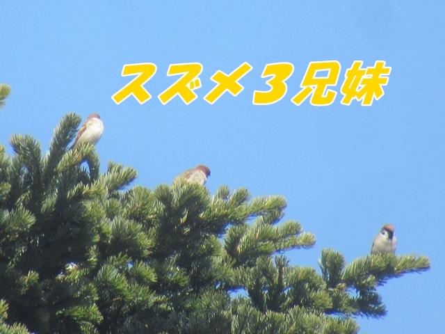 20210411IMG_8817.jpg