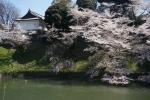 1.皇居の花見:千鳥ヶ淵-82D 1904q