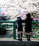 目黒川の花見風景-06D 05qrc
