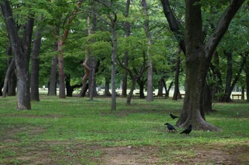 3.代々木公園:動物-02D 2104q