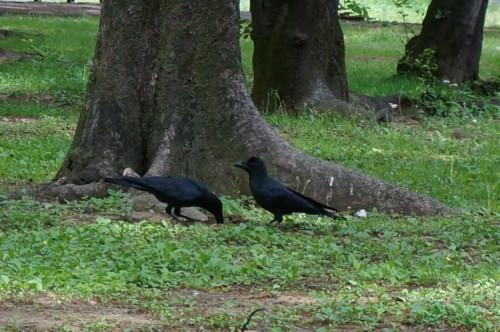 4.代々木公園:動物-01D
