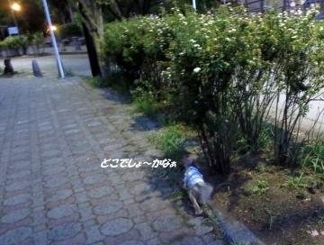 200508(2).jpg