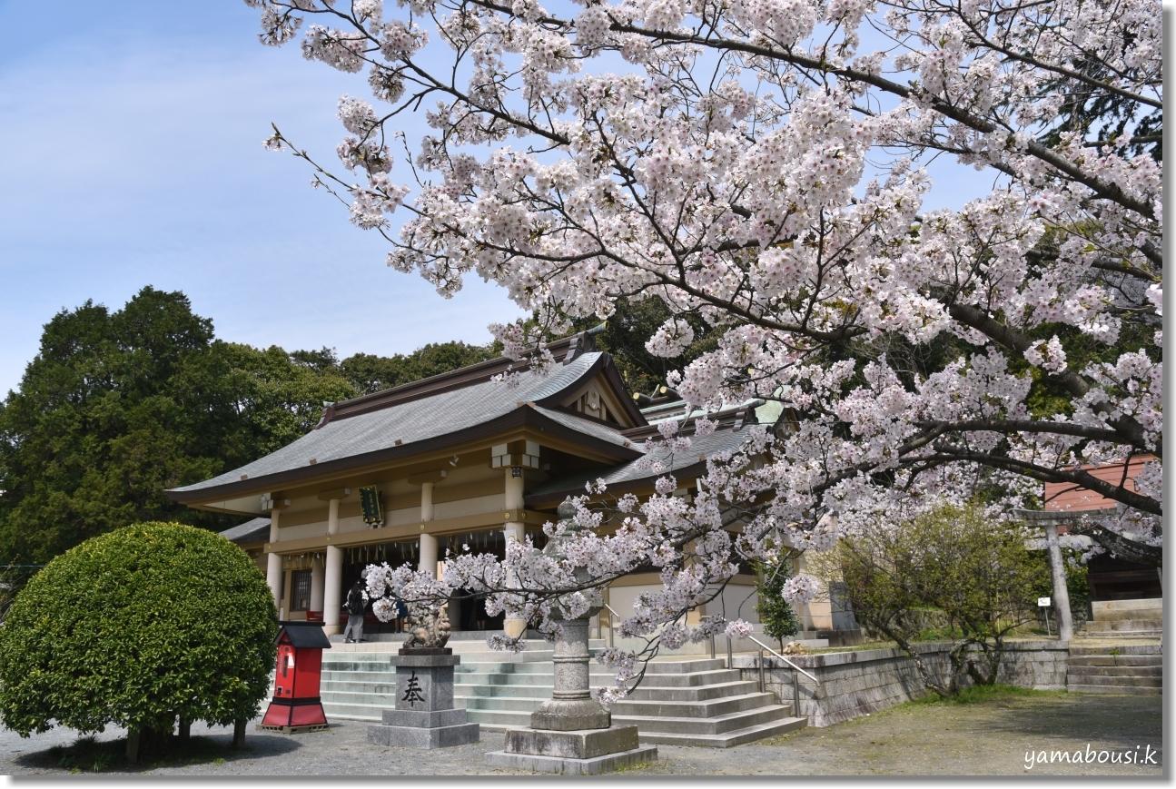 西公園の桜(染井吉野) 6