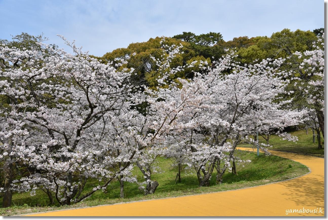 西公園の桜(染井吉野) 5