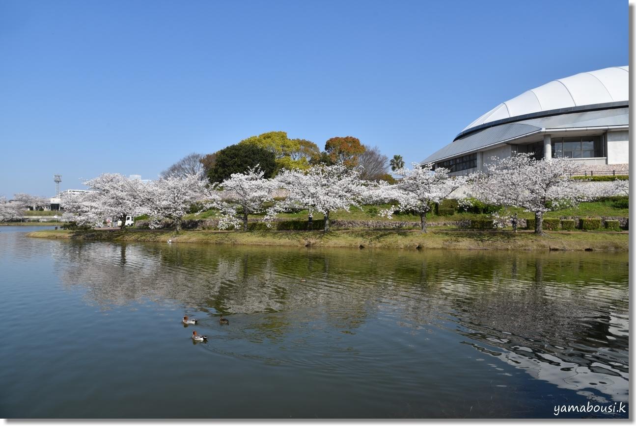 駕与丁(かよいちょう)公園 桜輝く春に。1