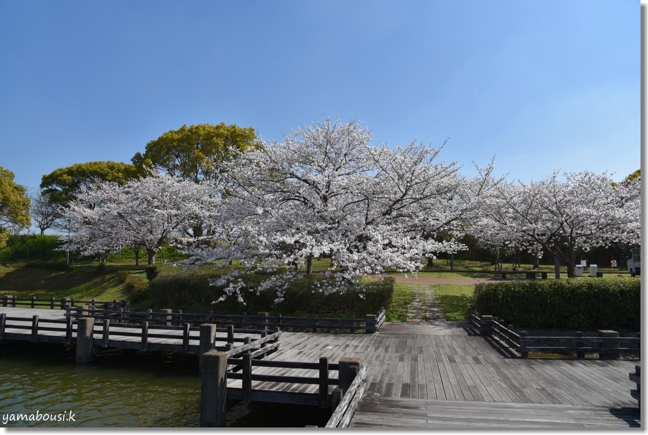 駕与丁(かよいちょう)公園 桜輝く春に。5