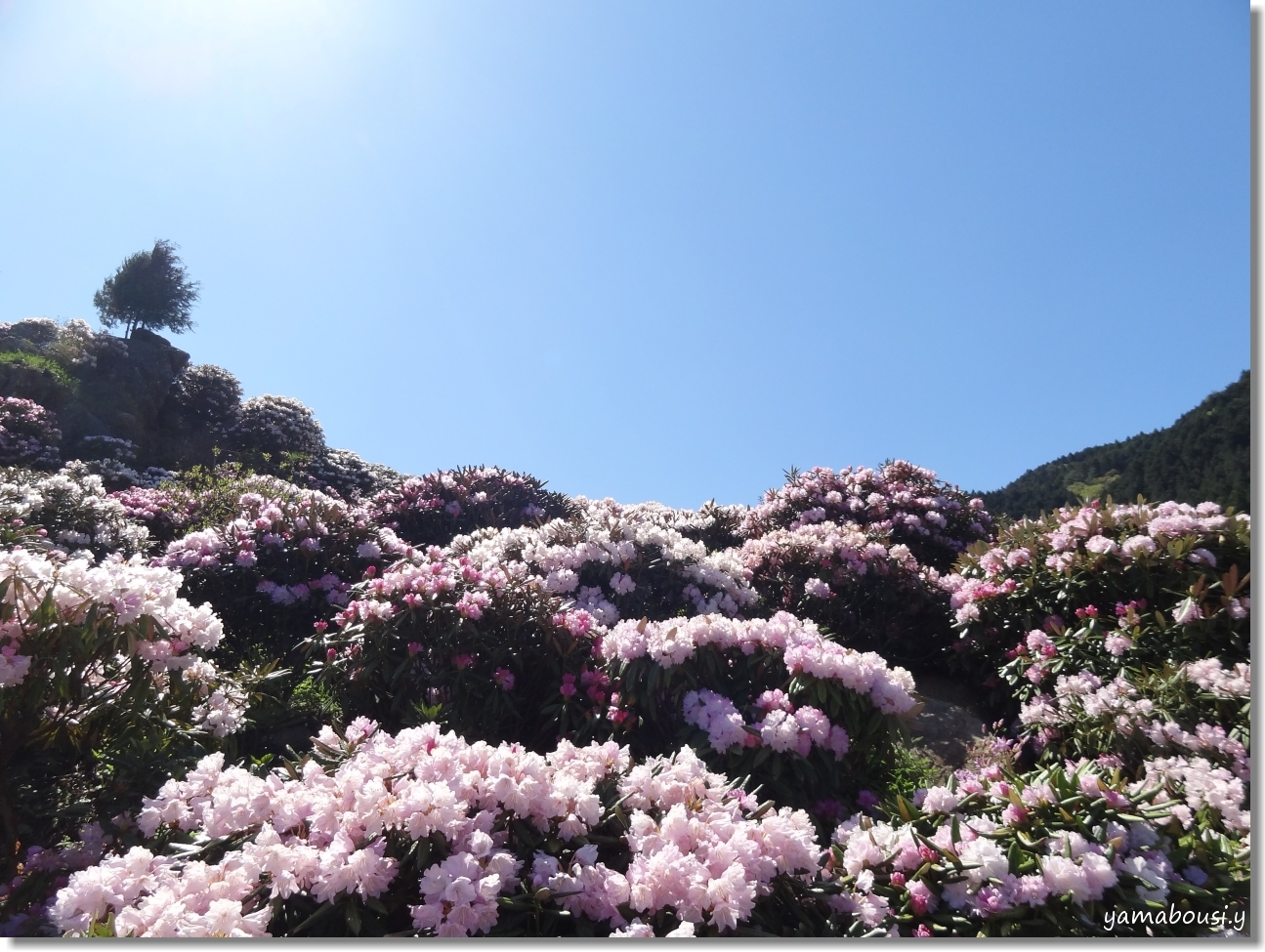 輝く花のように 2
