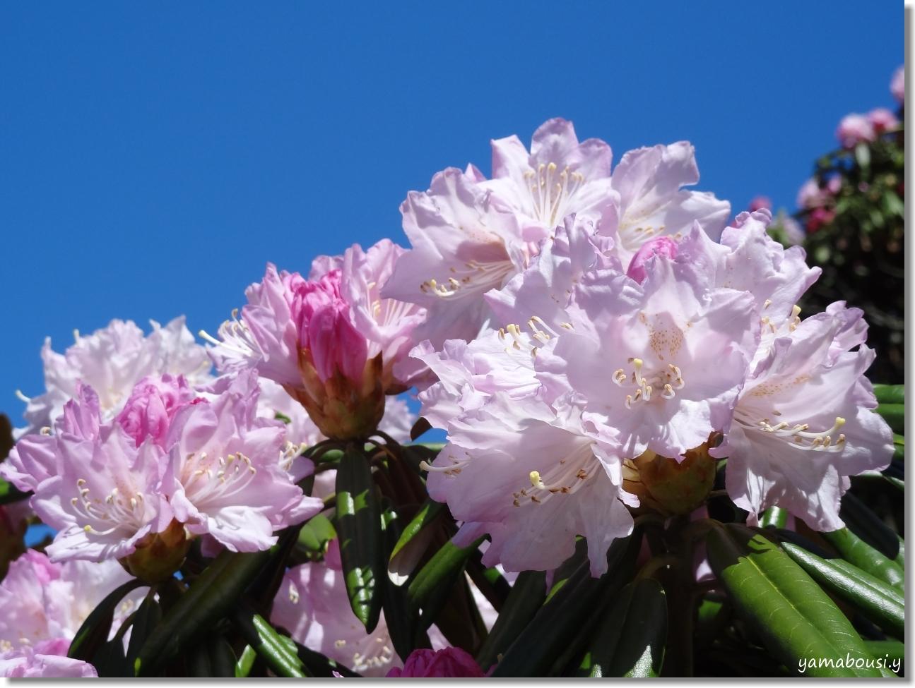 輝く花のように 4
