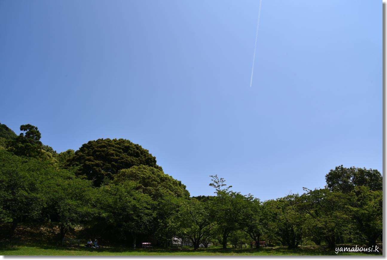 宮地嶽神社(2020)菖蒲が咲く頃に 4