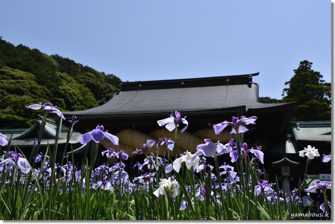 宮地嶽神社(2020)菖蒲が咲く頃に 5
