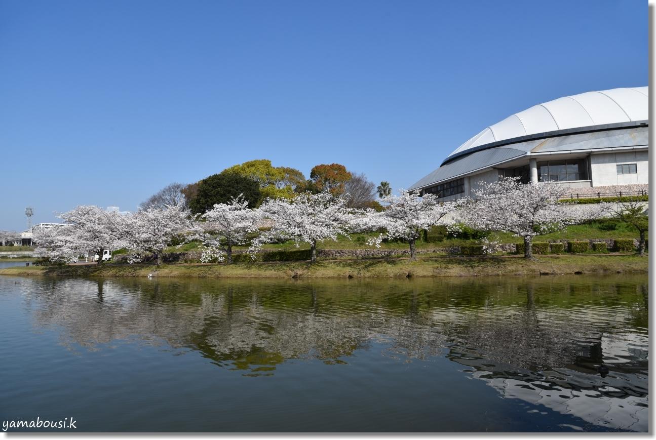駕与丁公園 春の桜は美しく 4