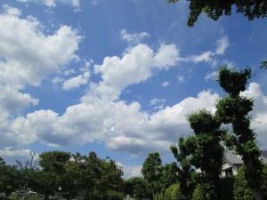 城跡公園 (7)