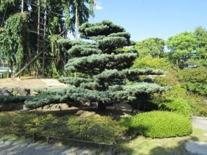 東寺 (14)