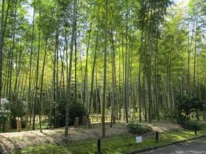 万博自然文化園 20