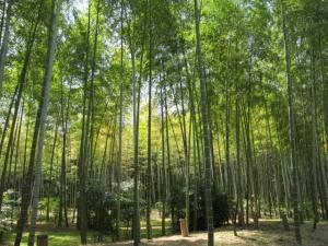 万博自然文化園 21