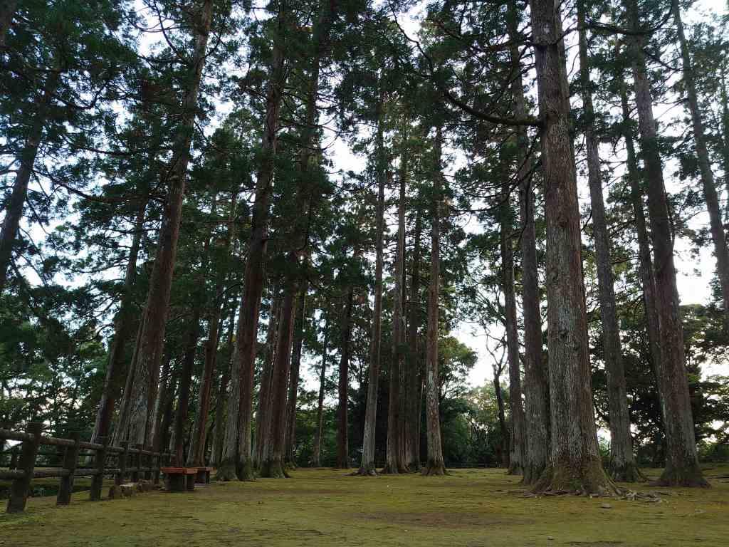 「飫肥城跡(宮崎県日南市)」旧本丸跡の幻想的な飫肥杉の大木!歴史を感じるスポット