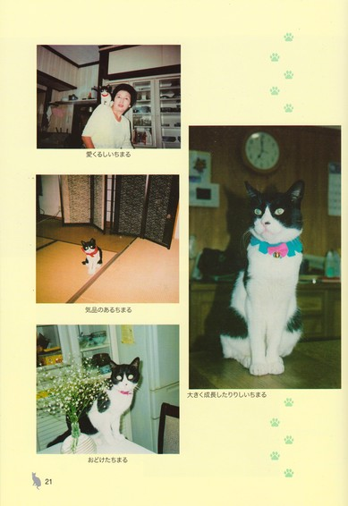 西村猫日和4 001